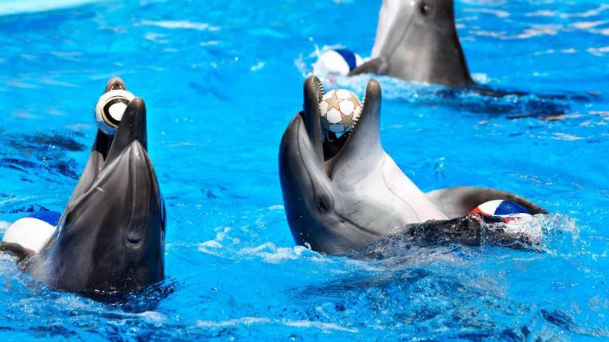 """В дельфінів облазить шкіра і зникає зір, – екологи про утримання тварин в київському """"Немо"""""""