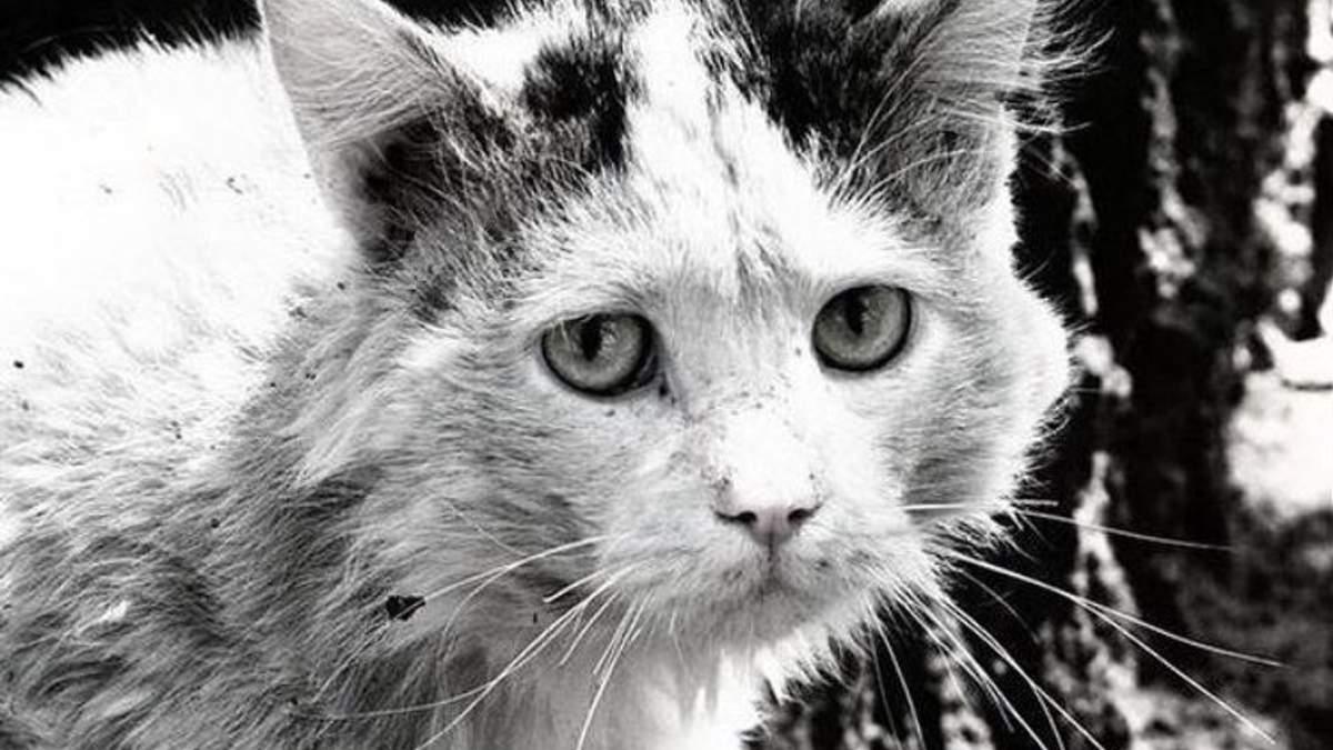 Тварина – не іграшка: як переживають зиму безпритульні коти в Україні та за кордоном