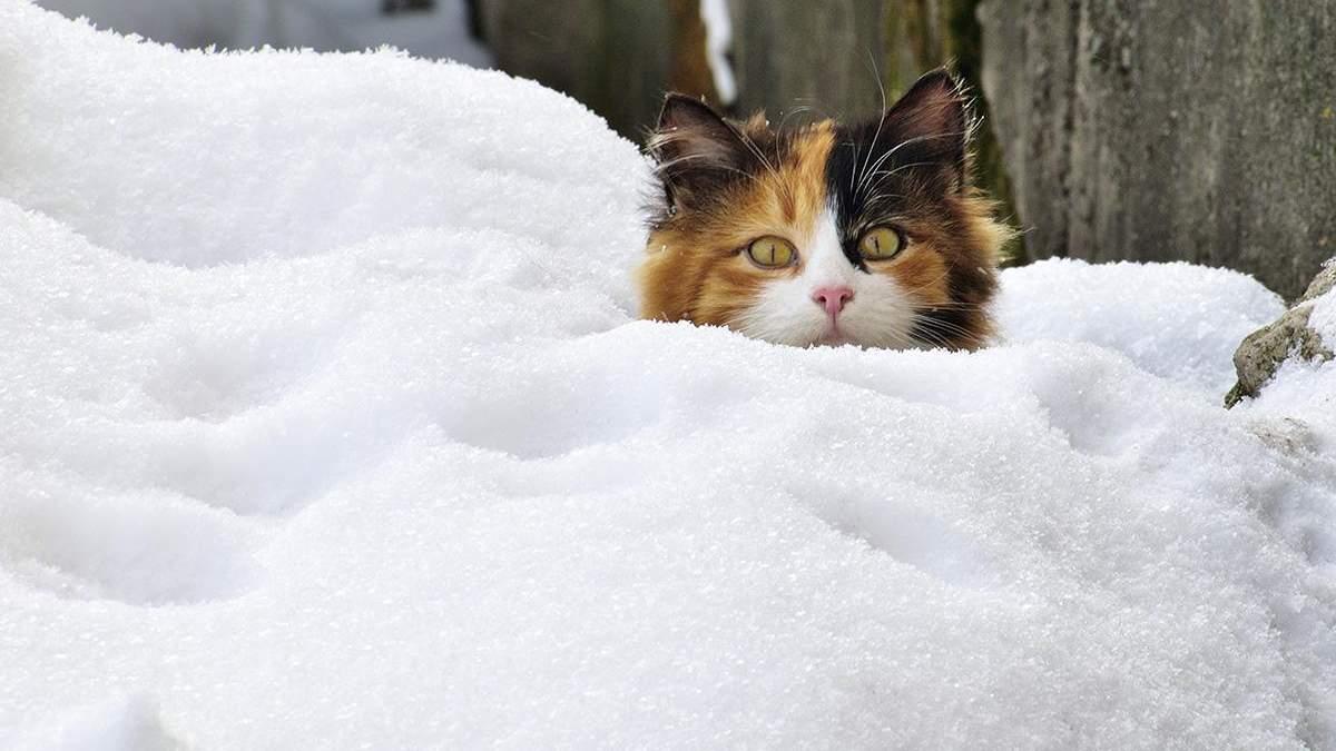 Когда будет снег в Киеве и всей Украине 2020 – прогноз когда выпадет снег в 2020 году