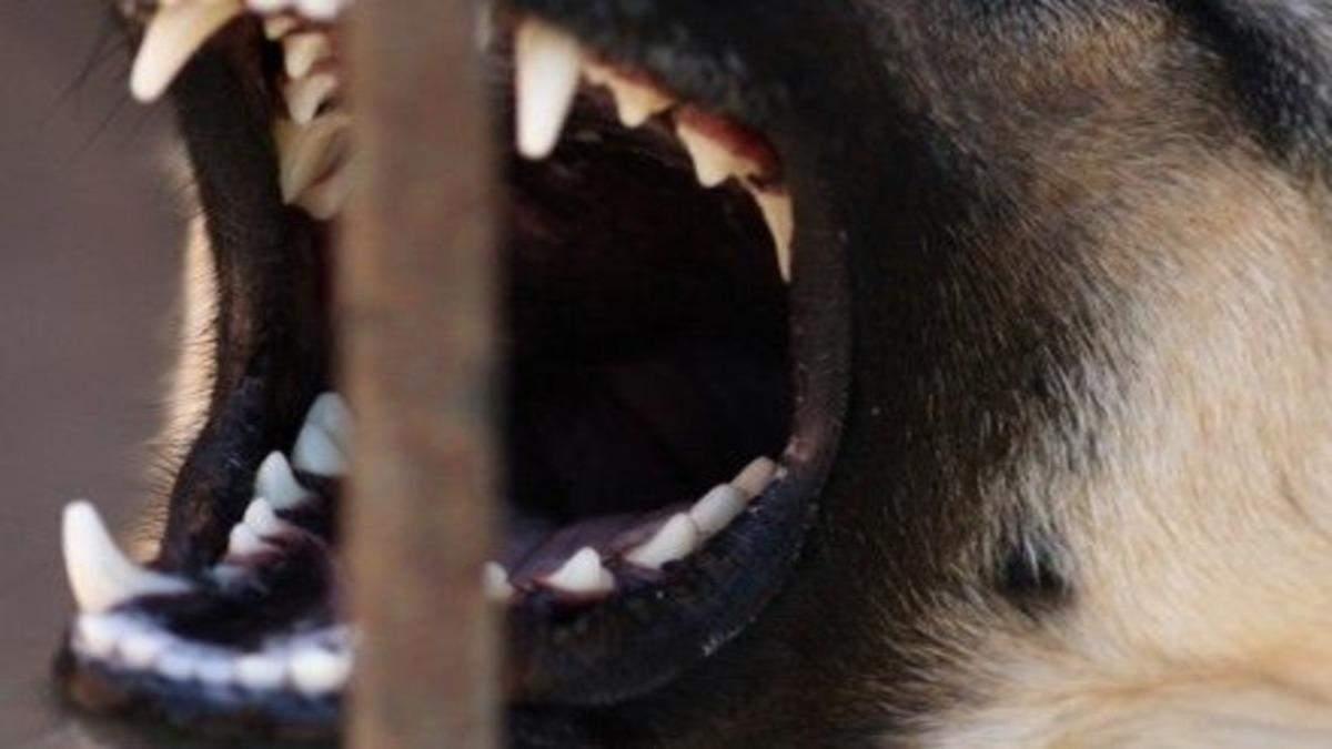Бійцівський собака покусав перехожих