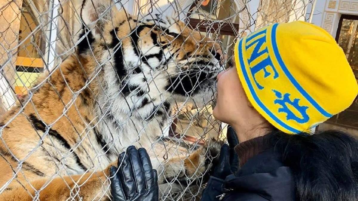 Шістьох покинутих тигрів заберуть у притулки і зоопарки