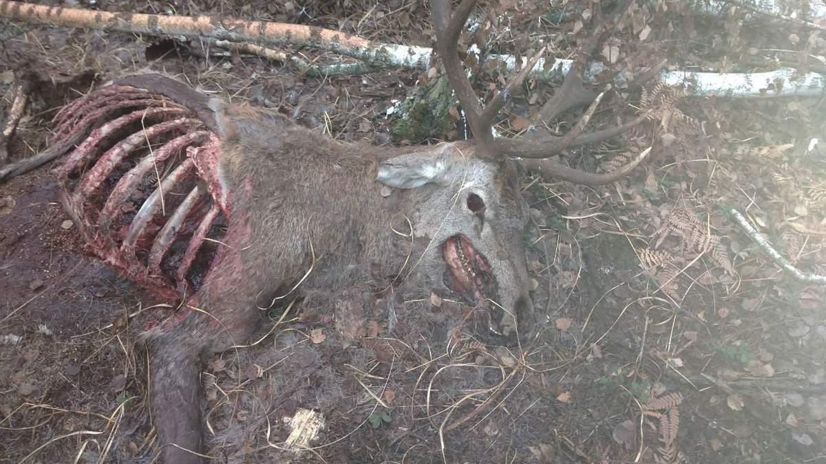 В резиденции президента возле Киева, несмотря на запрет, убивают животных