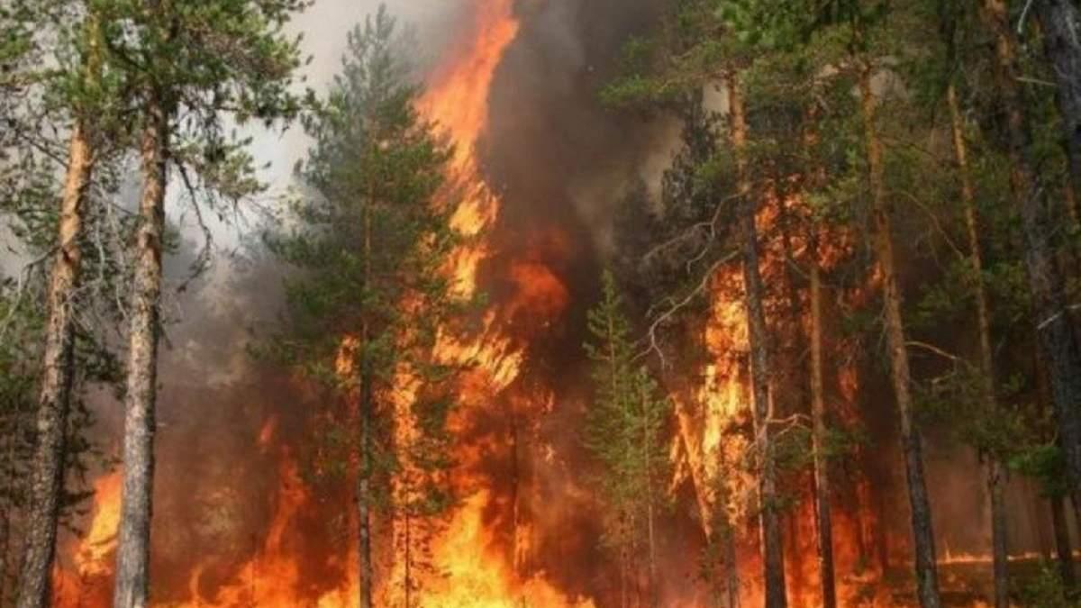 За пол года площадь пожаров в лесах Украины выросла в 40 раз