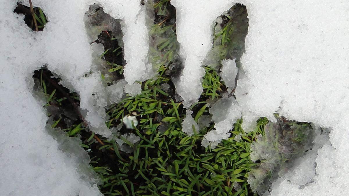 У Києві комунальники стрижуть газони коли йде сніг