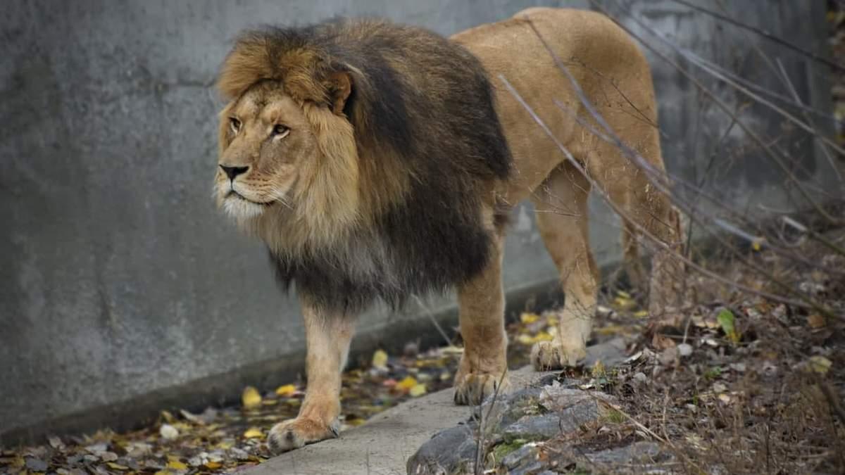 Куда пойти в Киеве: зоопарк в столице снизил цену билетов