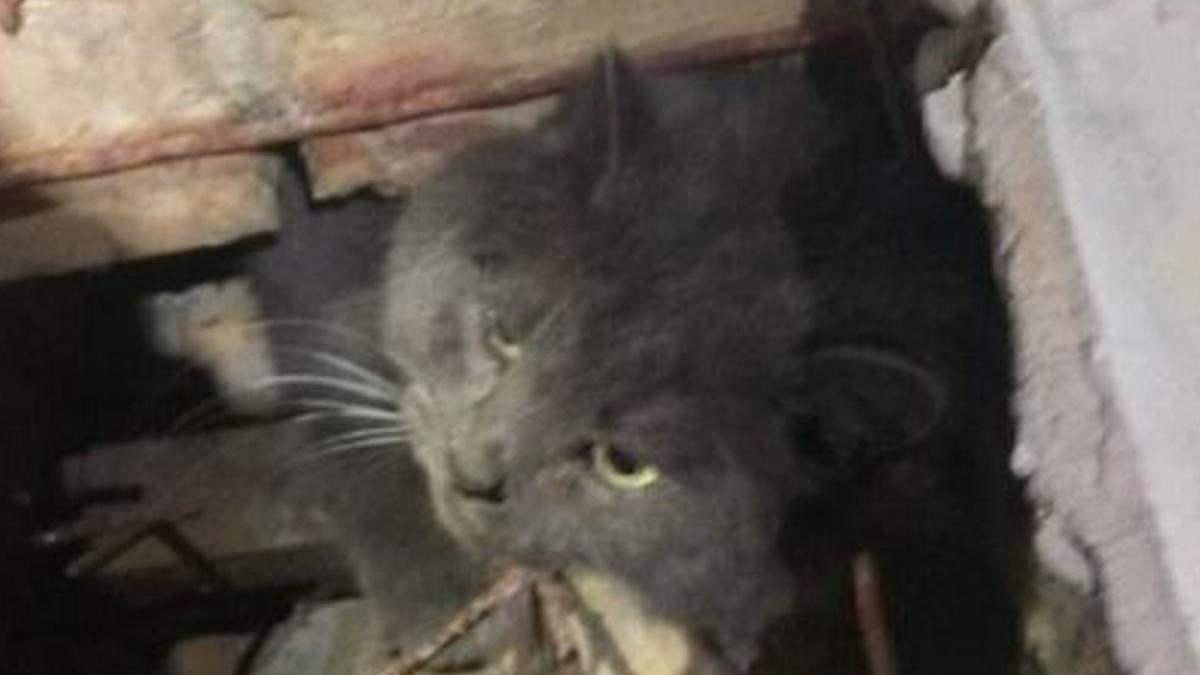 В Киеве гладкий котик пытался залезть в библиотеку: курьезное фото