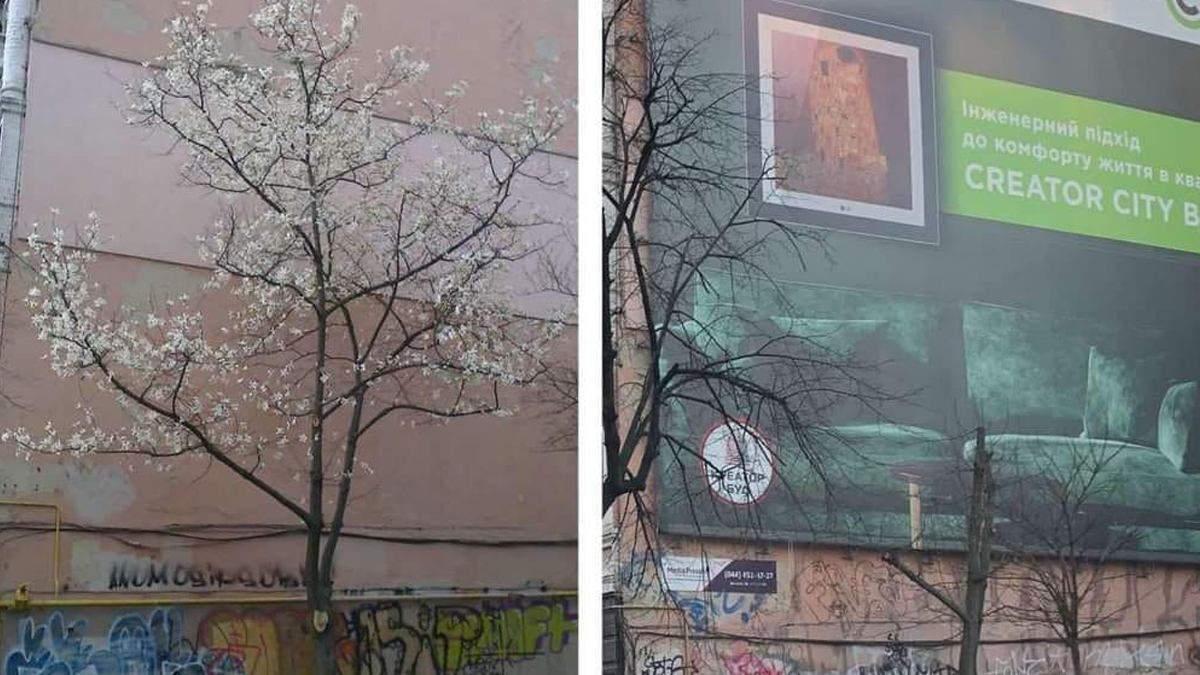 В Киеве ради рекламы уничтожили дерево магнолии: разгорелся скандал