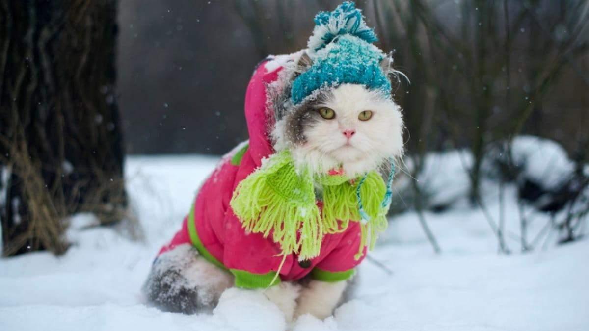 Кличко призывает сократить рабочий день из-за метели и морозов