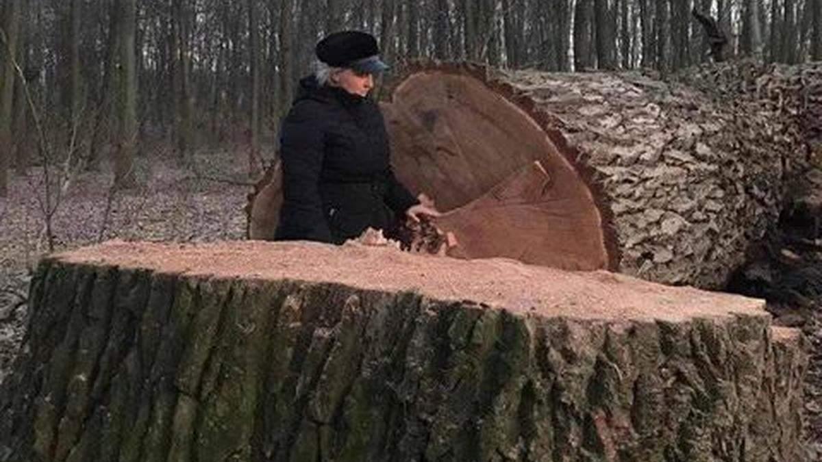 В Голосеевском парке неизвестные срезали 17 живых вековых дубов