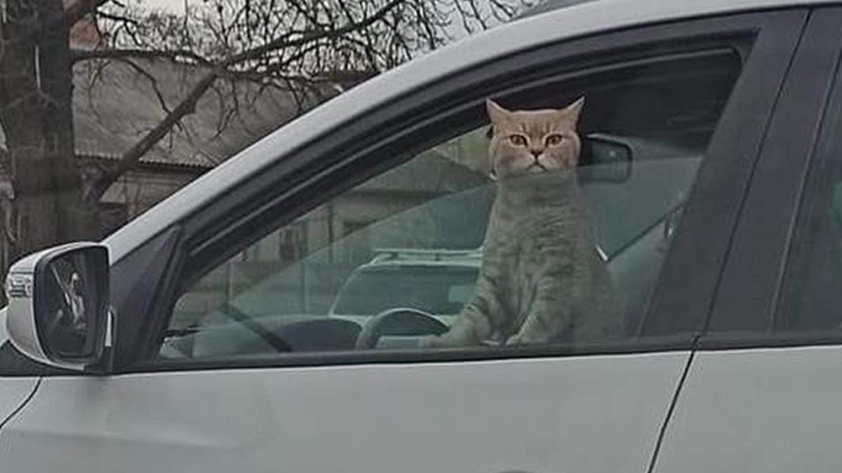 Кот был за рулем: в Киеве во время затора сделали смешное фото