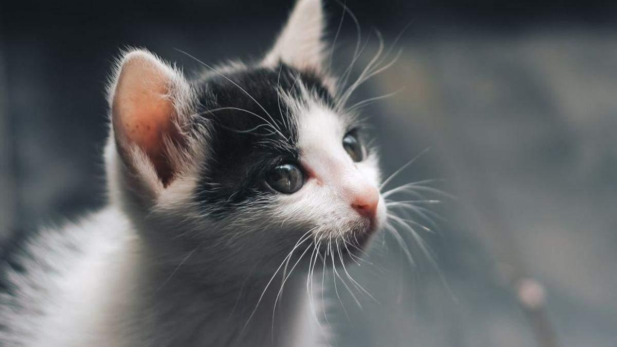 На Троещине в Киеве кошку с четырьмя котятами выбросили с высоты