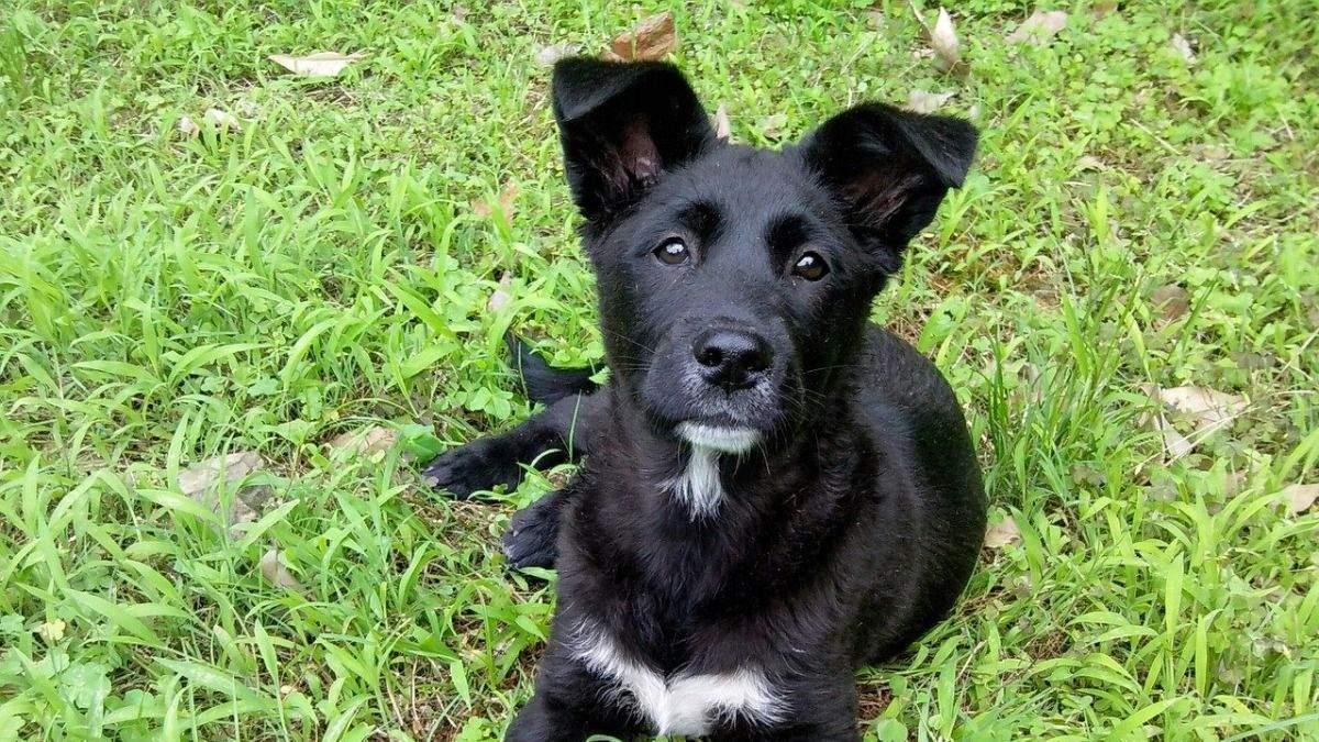 У Києві чоловік викинув собаку з багатоповерхівки: вона не вижила