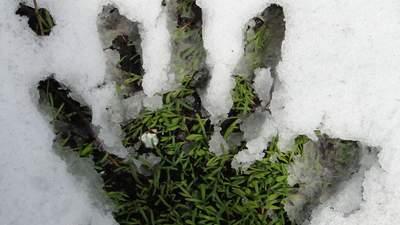 Загадкова місія: у Києві комунальники стрижуть газони, коли йде сніг