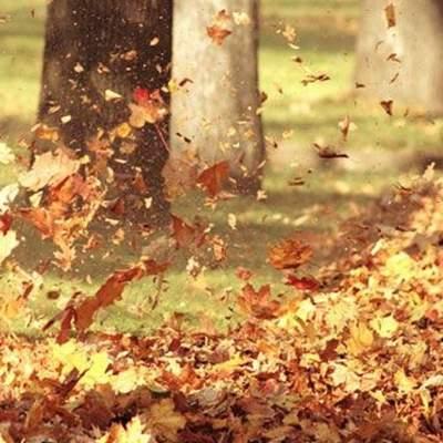 Почти на 2 градуса: ноябрь в Киеве был теплее климатической нормы