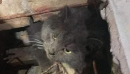 У Києві гладкий котик намагався залізти у бібліотеку, але застряг у вентиляції: курйозне фото