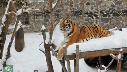 Зима у київському зоопарку: фото тварин серед снігових кучугур