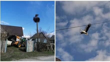 Как спасти аварийное гнездо аиста: пример с Киевщины